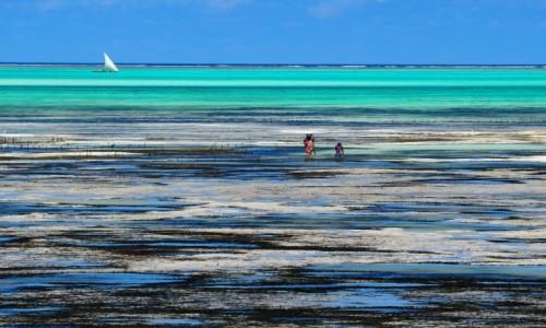 TANZANIA / Zanzibar / Jambiani / Oszołomienie
