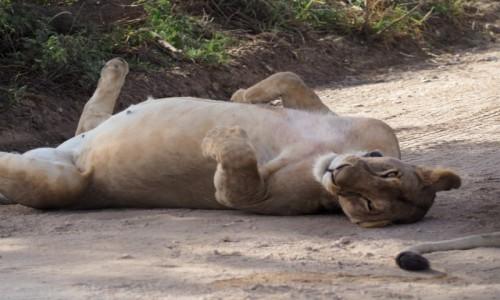 Zdjęcie TANZANIA / Północ / Serengeti / pierwsze art