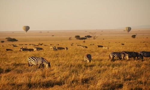 TANZANIA / Północ / Serengeti / serengeti1