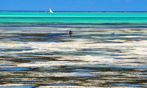 Zdjecie TANZANIA / Zanzibar / Jambiani / Oszołomienie