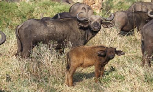 TANZANIA / Północ / Serengeti / I co się gapisz?