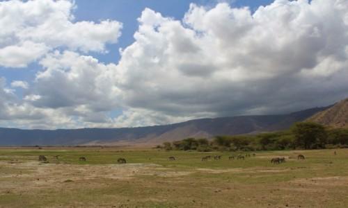 TANZANIA / Ngorongoro / Krater Ngorongoro / Tanzania - Safari