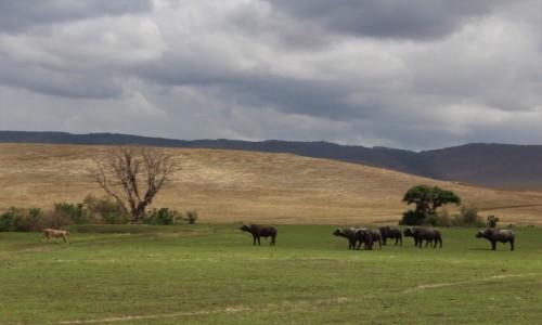 Zdjecie TANZANIA / Ngorongoro / Krater Ngorongoro / Tanzania - Safari