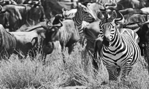 Zdjecie TANZANIA / Serengeti / Serengeti National Park / Wyjątkowa