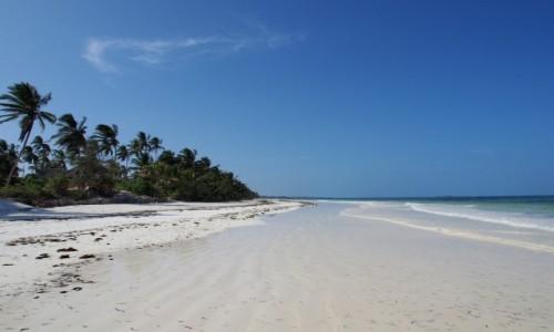 Zdjecie TANZANIA / Zanzibar / okolice Matemwe / pusto