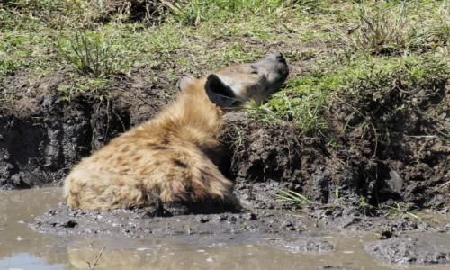 Zdjecie TANZANIA / Serengeti / Serengeti centralne / relaks