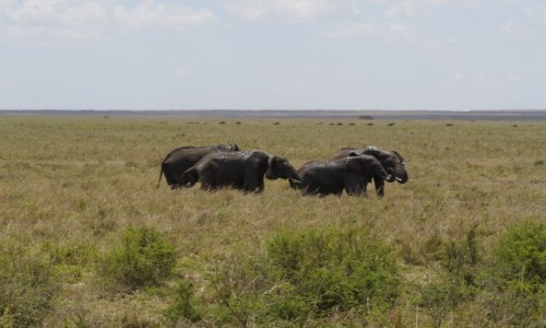 Zdjecie TANZANIA / afryka wschodnia / Serengeti / w grupie