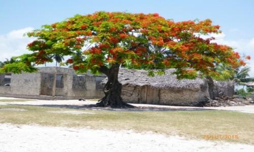 Zdjecie TANZANIA / Zanzibar / Jambiani / citycenter of Jambiani