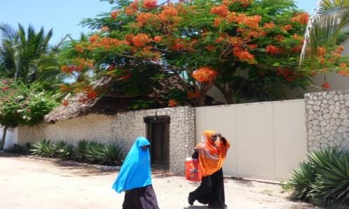 Zdjecie TANZANIA / Zanzibar / Jambiani / migawka..