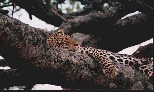 Zdjecie TANZANIA / brak / P.N. Serengeti / afrykańskie portrety 8