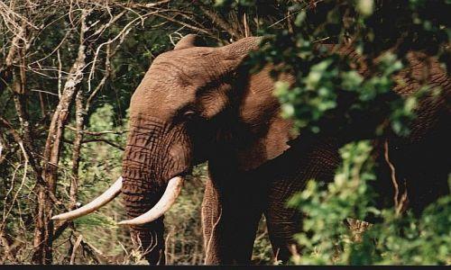 Zdjęcie TANZANIA / -Ngorongoro / camping Simba  / afrykańskie portrety 10