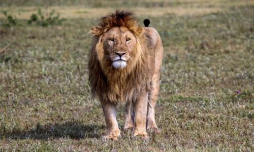 Zdjęcie TANZANIA / - / Ngorongoro / Nigdy więcej, nie patrz na mnie, takim wzrokiem...