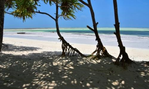 TANZANIA / Zanzibar / wschodnie wybrzeże / Namorzyny