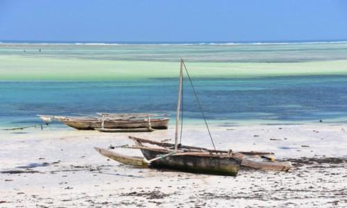 Zdjecie TANZANIA / Zanzibar / wschodnie wybrzeże / Odpływ