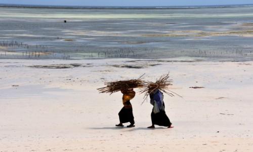 Zdjęcie TANZANIA / Zanzibar / wschodnie wybrzeże / Zbieraczki chrustu (na zimę?)