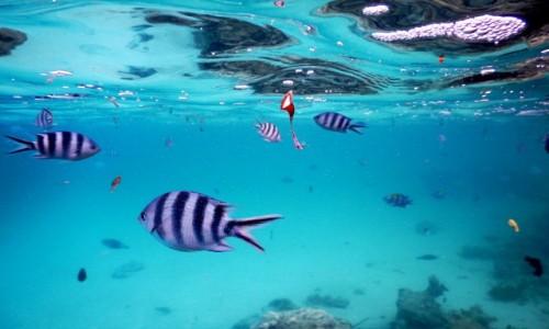 Zdjecie TANZANIA / Zanzibar / okolice Wyspy Mnemba / Pod wodą