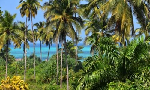 Zdjecie TANZANIA / Zanzibar / wybrzeże wschodnie / Nad brzegami oceanu