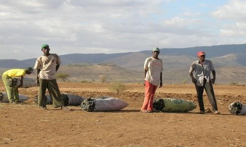 Zdjęcie TANZANIA / okolice Arushy / gdzieś na trasie / sprzedawcy węgla