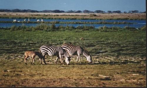 Zdjęcie TANZANIA / P.N. Jezioro Manyarra / j.w. / jezioro Manyara