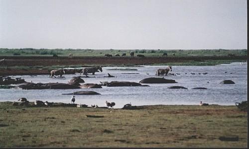 Zdjecie TANZANIA / P.N. Jezioro Manyarra / j.w. / jezioro Manyara