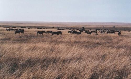 Zdjęcie TANZANIA / P.N. Serengeti / j.w. / bezkresna równina