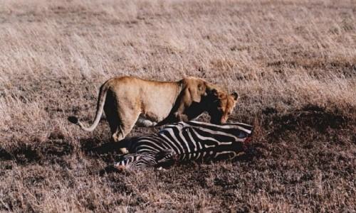 Zdjecie TANZANIA / P.N. Serengeti / j.w. / śniadanie