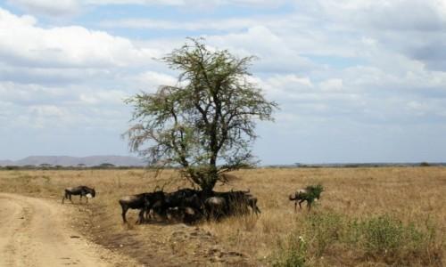 Zdjęcie TANZANIA / P.N. Serengeti / j.w. / w samo południe