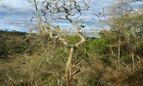 Zdjęcie TANZANIA / obszar chroniony Ngorongoro / j.w. / tańzańska dżungla
