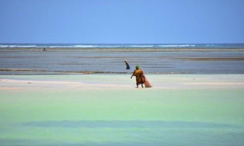Zdjecie TANZANIA / Zanzibar / wybrzeże wschodnie / W czasie odpływu