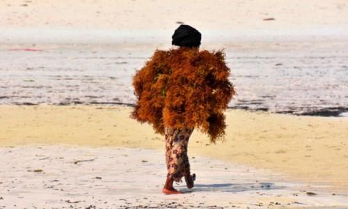 Zdjecie TANZANIA / Zanzibar / wybrzeże wschodnie / W pelerynie z alg
