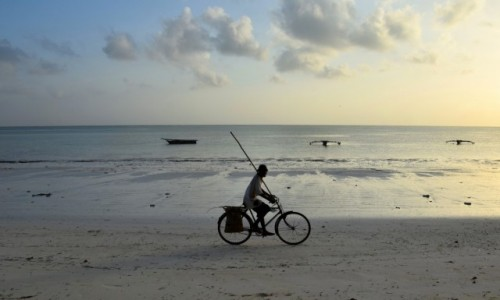 Zdjecie TANZANIA / Zanzibar / wybrzeże wschodnie / O świcie do pracy