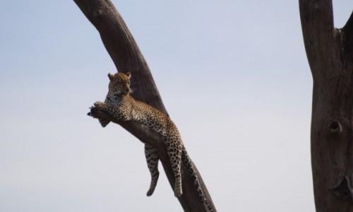 Zdjecie TANZANIA / Serengeti / Serengeti / Wypoczynek