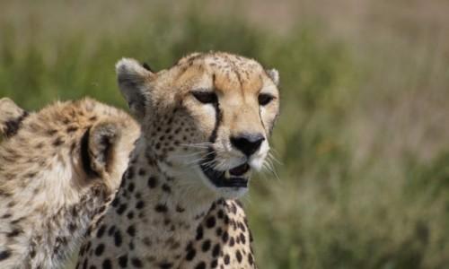 Zdjecie TANZANIA / Serengeti / Serengeti / Jestem piękna