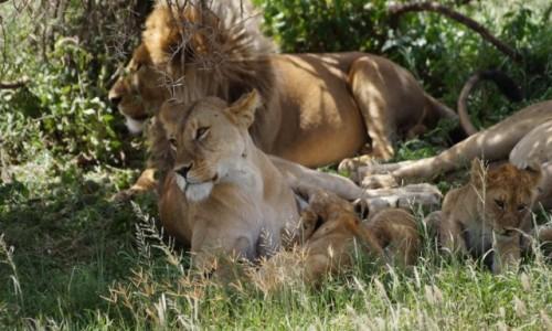 Zdjecie TANZANIA / Serengeti / Serengeti / Kochająca Rodzinka
