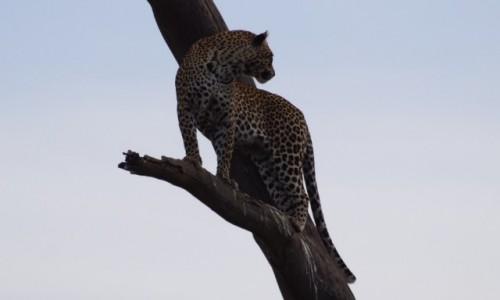 Zdjecie TANZANIA / Serengeti / Serengeti / Chyba sobie pójdę