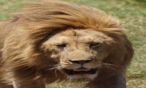 Zdjecie TANZANIA / Serengeti / Serengeti / Wymaga szacunku