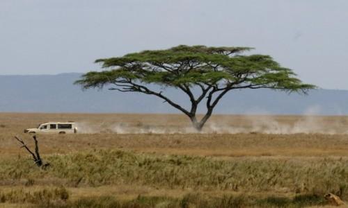 Zdjecie TANZANIA / Serengeti / Gdzieś na Serengeti / Znajdziesz lwicę na tym zdjęciu?