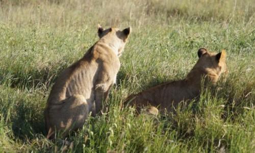 Zdjecie TANZANIA / Serengeti / Serengeti / Biedne chudziny