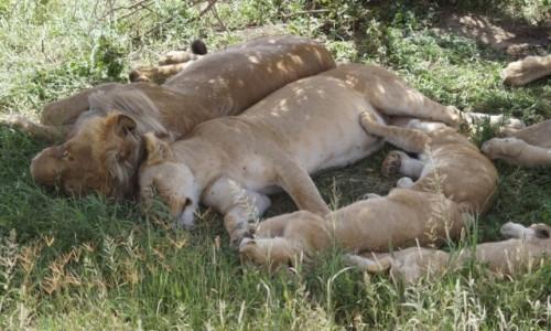 TANZANIA / Serengeti / Serengeti / W samo południe