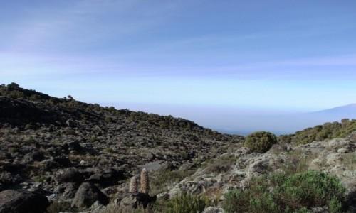 Zdjęcie TANZANIA / Kilimandżaro / Szlak na Kilimandżaro / W drodze na Kilimandżaro