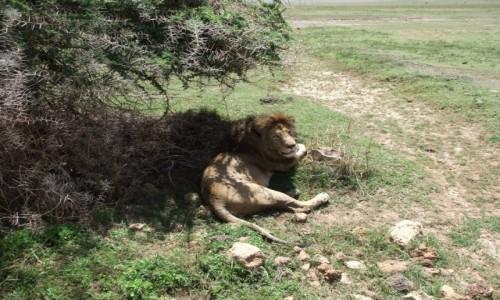 Zdjecie TANZANIA / Afryka Środkowa / Park Ngorongoro / Safari w Parku Ngorongoro