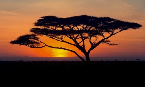 TANZANIA / Serengeti / Serengeti / Wschód słonka w Serengeti