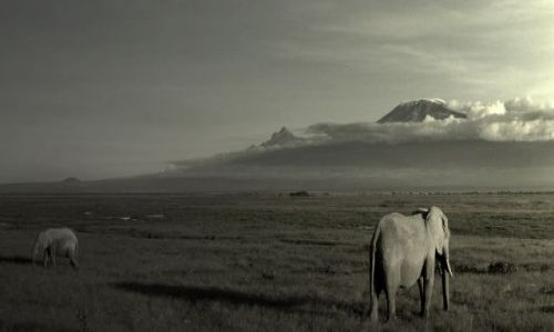 Zdjecie TANZANIA / Mara / Afryka / ***