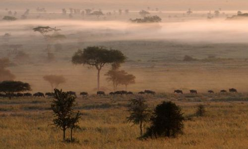 TANZANIA / Serengeti / Afryka / ***