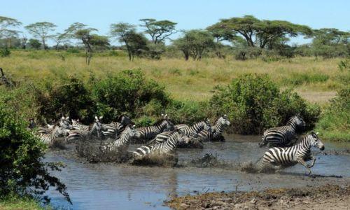 Zdjęcie TANZANIA / Serengeti / Afryka / ***