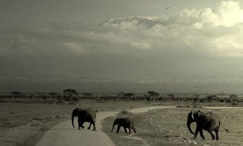 Zdjecie TANZANIA / brak / pod  Kilimandżaro / ***