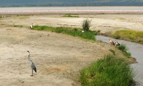 Zdjęcie TANZANIA / Północna Tanzania / Ngorongoro / ***