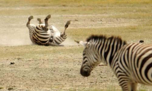 Zdjęcie TANZANIA / Afryaka Ngorongoro / Ngorongoro / Na Ngorongoro