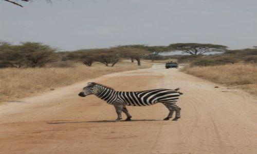 Zdjęcie TANZANIA / NGORONGORO / sawanna / i jeszcze jedno
