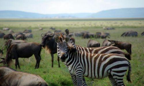 Zdjecie TANZANIA / brak / Serengeti / *